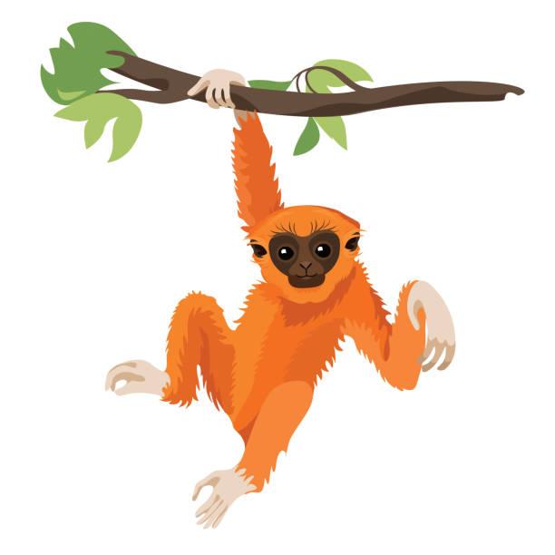 Gibbon primate mammal. Monkey in wildlife. Vector Gibbon primate mammal. Monkey in wildlife. Vector illustration monkey stock illustrations