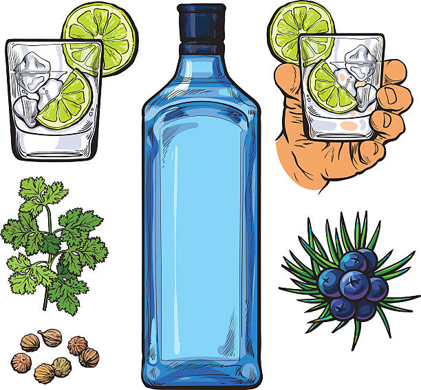 Gin bottle, shot glass with ice and lime, juniper berries Gin bottle, shot glass with ice and lime, juniper berries, parsley, cardamom, sketch vector illustration isolated on white background. hand drawn gin bottle, shot glass and cocktail ingredients tonic water stock illustrations