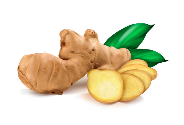 ginger roots on white background ginger roots on white background ginger spice stock illustrations