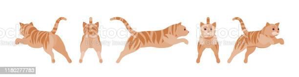 Ginger tabby cat jumping vector id1180277783?b=1&k=6&m=1180277783&s=612x612&h=wzbobf snejdozkwsw54 zhojtslewjjt 9x0b4axbi=
