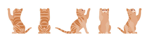 stockillustraties, clipart, cartoons en iconen met gember tabby kat spelen - miauwen