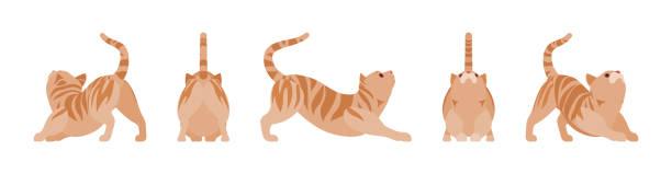 stockillustraties, clipart, cartoons en iconen met gember tabby kat stretching - miauwen
