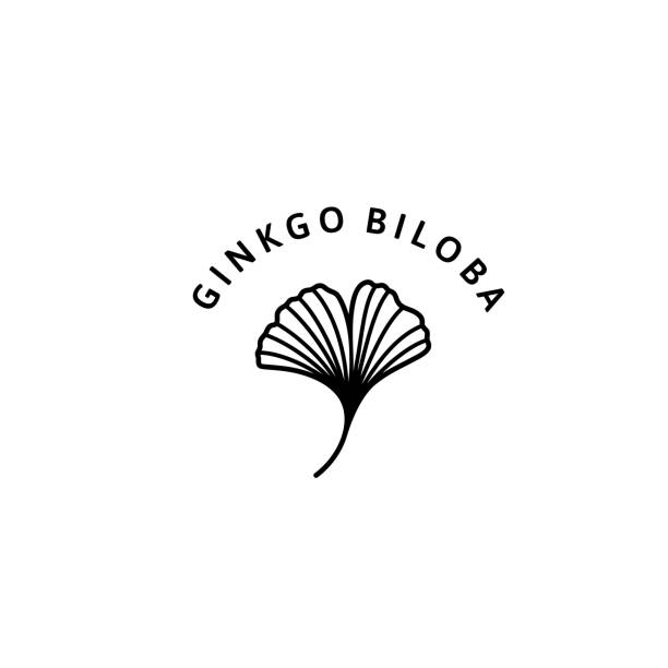 Ginkgo Biloba Leaf herbal organic badge and icon in trendy minimalist linear style. Vector Logo Emblem of gingko. Ginkgo Biloba Leaf herbal organic badge and icon in trendy minimalist linear style. Vector Logo Emblem of gingko. Can be Used Template for packing Cosmetics, Medicines, organic food ginkgo stock illustrations