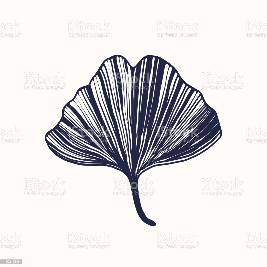 Ginkgo biloba leaf vector art illustration