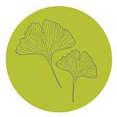 istock Ginkgo Biloba leaves icon vector illustration 1250206897