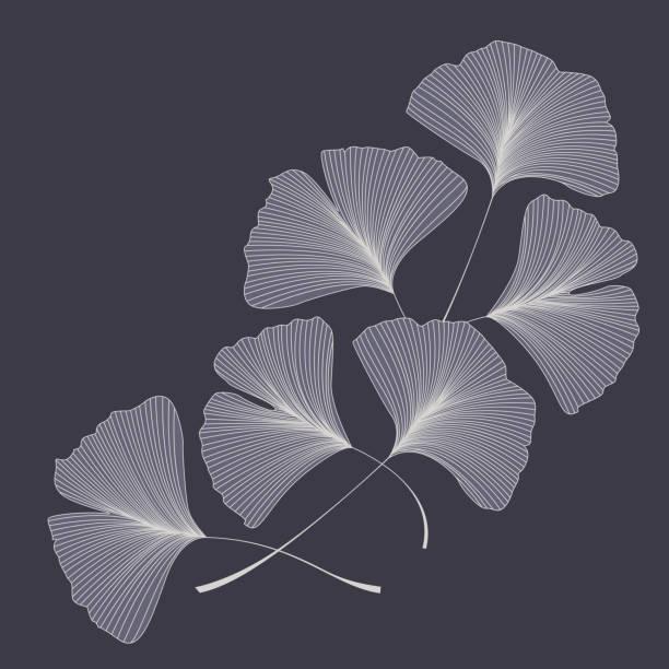 Ginkgo biloba leaves Vector illustration of ginkgo biloba leaves. Background with silhouette of leaves ginkgo stock illustrations