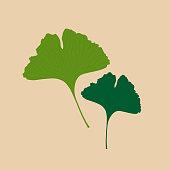 istock Ginkgo biloba leaves vector illustration 1217372603