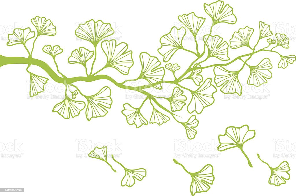 ginkgo branch with leaves, vector vector art illustration