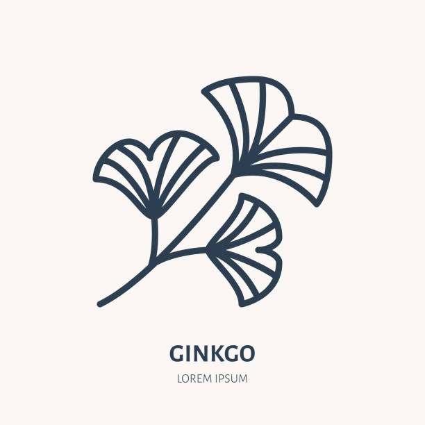 Ginkgo flat line icon. Chinese medicinal plant vector illustration. Thin sign for herbal medicine Ginkgo flat line icon. Chinese medicinal plant vector illustration. Thin sign for herbal medicine. ginkgo stock illustrations