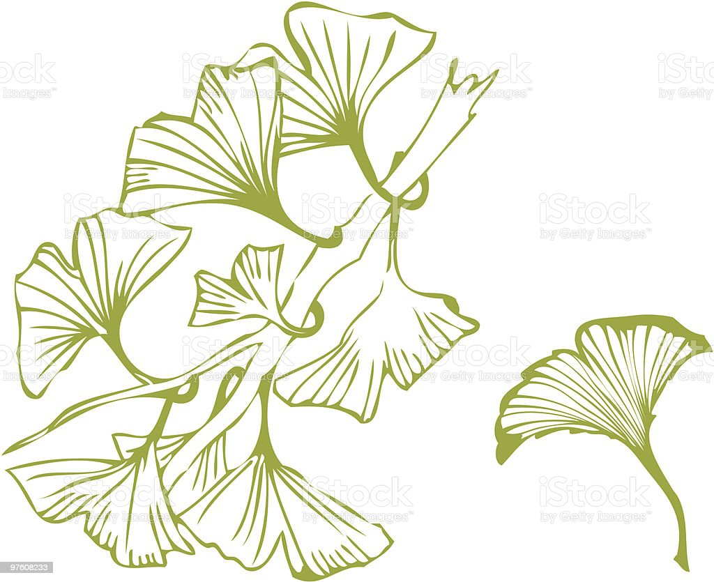 ginkgo royalty-free ginkgo stock vector art & more images of botany