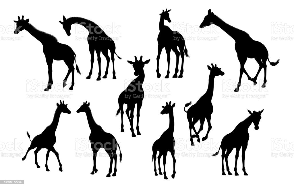 Line Drawing Giraffe : Giraffe animal silhouettes stock vector art & more images of africa