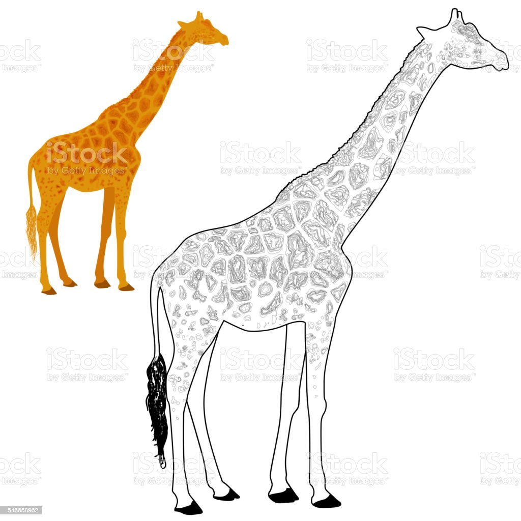 Giraffe Coloring Page Stock Vector Art & More Images of Adult ...