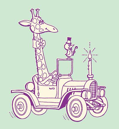 Giraffe Driving Old Car