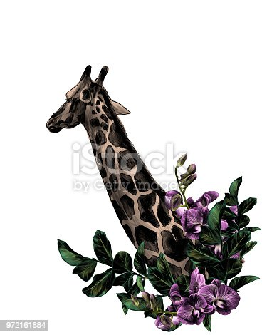 giraffe head sideways with a wreath in the form of a frame from the bottom of the tree branches with leaves and branches of Orchid flowers, sketch vector graphics color illustration