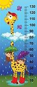 giraffe height measure(in original proportions 1:4) - vector illustration, eps