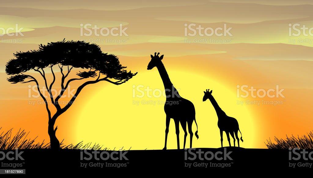 Giraffe in a beautiful nature vector art illustration