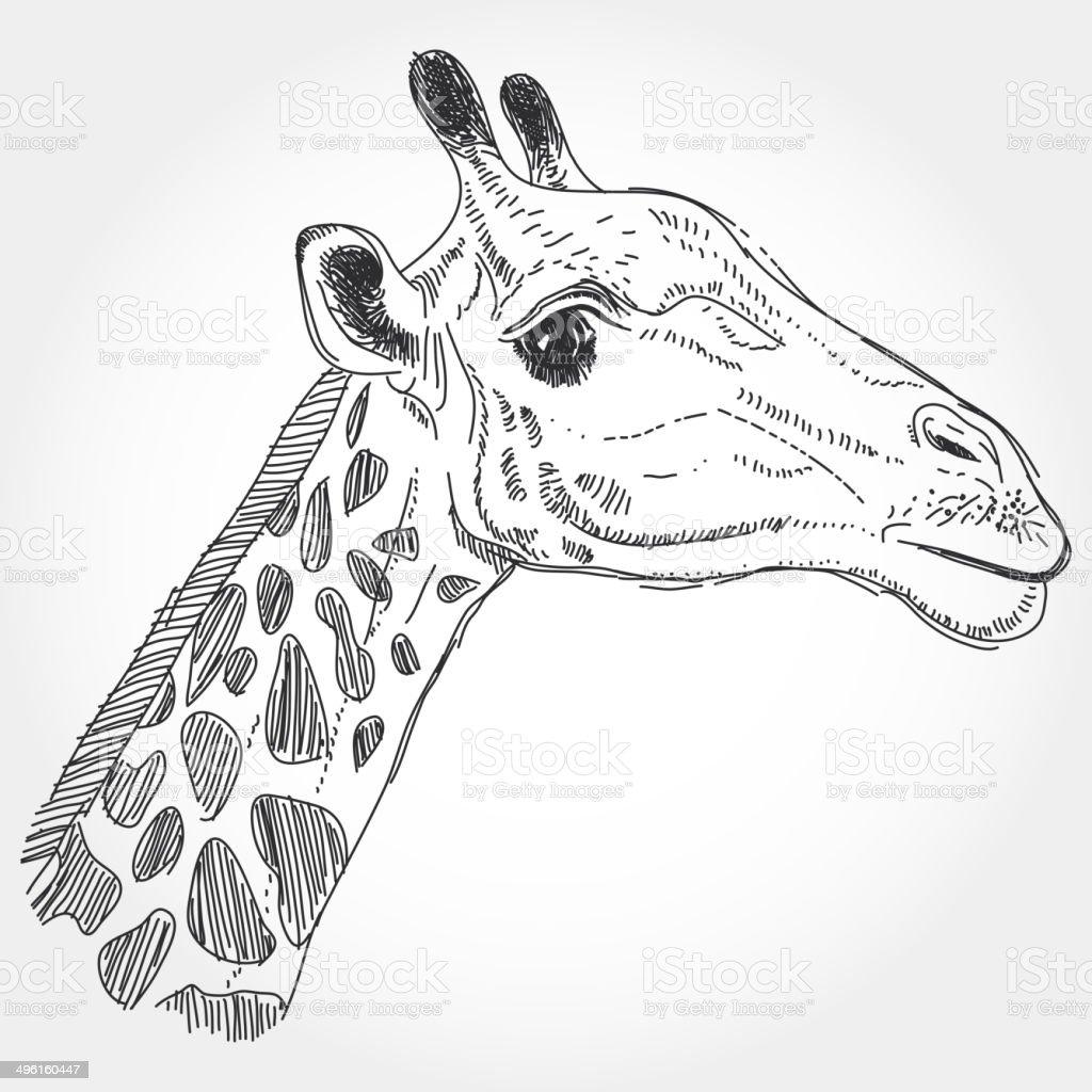 Profilo Nero Giraffa Isolato Su Sfondo Bianco Disegno A Mano Libera