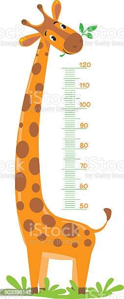 Giraffe meter wall vector id503396142?b=1&k=6&m=503396142&s=612x612&h=zkobbpjc4bstrc43sb1hocndprze6jvmud8hjopd gq=