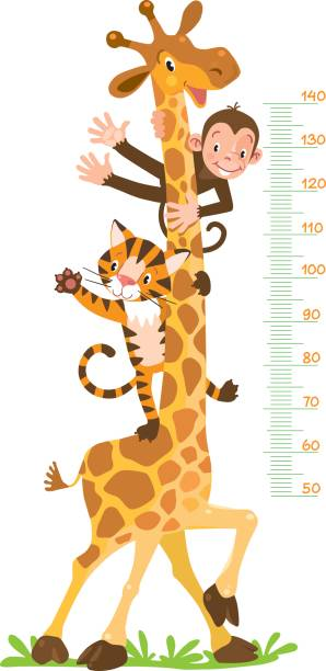 stockillustraties, clipart, cartoons en iconen met giraffe, monkey, tiger. meter wall or height chart - lang lengte