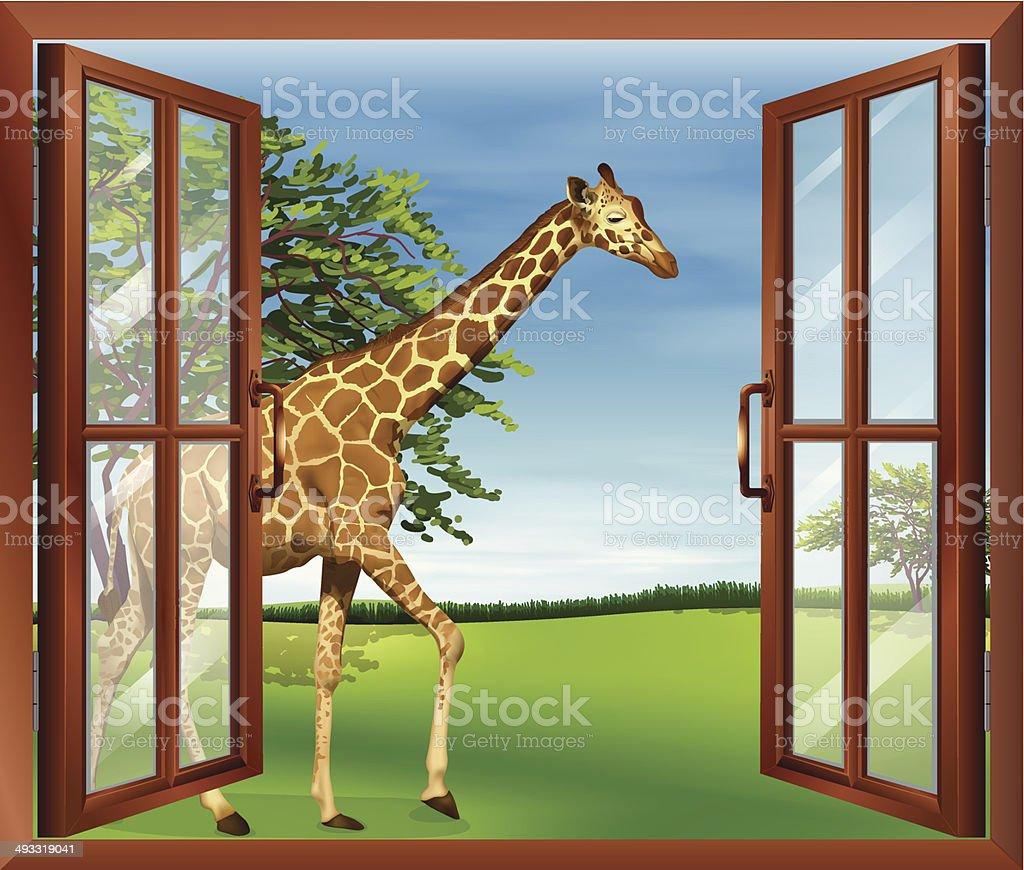 Giraffe outside the window vector art illustration