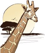 Stock illustration of a giraffe in the wild. This image was purposely created in a sketch like style. Enjoy