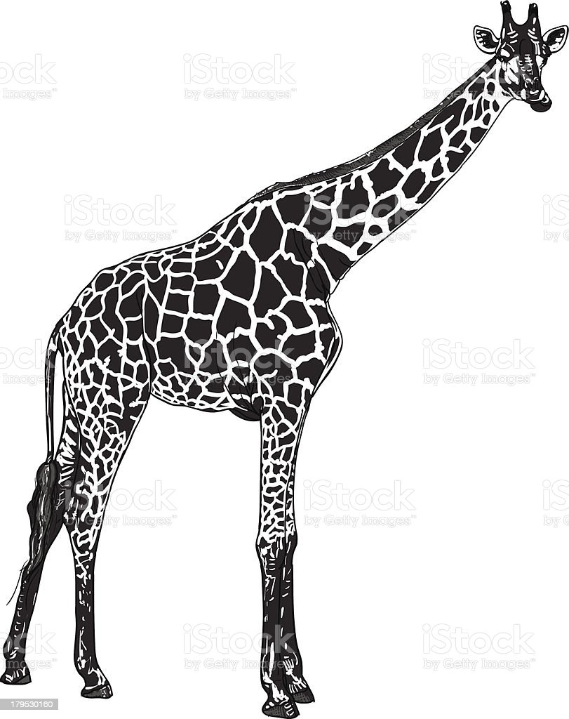 Giraffe royalty-free stock vector art