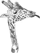 Giraffe vector illustration. Additional EPS file contains the same image with lines in stroke form, allowing you to convert to a brush of your choosing. Colors are layered and grouped separately. Easily editable.