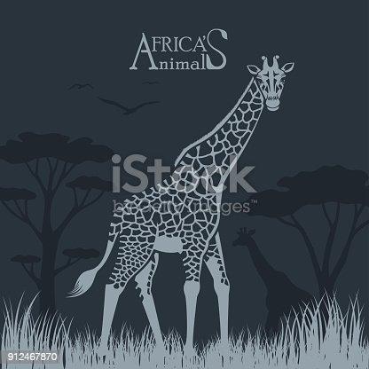 istock Giraffe 912467870