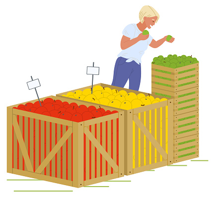 Girl Putting Apples Wooden Boxes Vector Image
