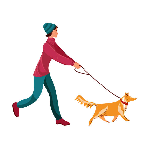 Girl walking her red collie dog vector illustration Hand drawn brunette girl walking her red collie dog over white background vector illustration. Day of woman concept one young woman only stock illustrations