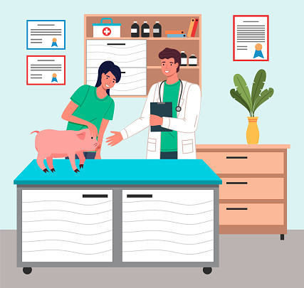 Girl with piglet at reception at veterinarian. Pet on veterinary table. Veterinarian examines pig