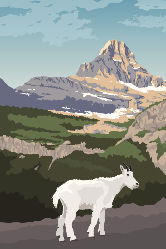 Glacier National Park with Mountain Goat