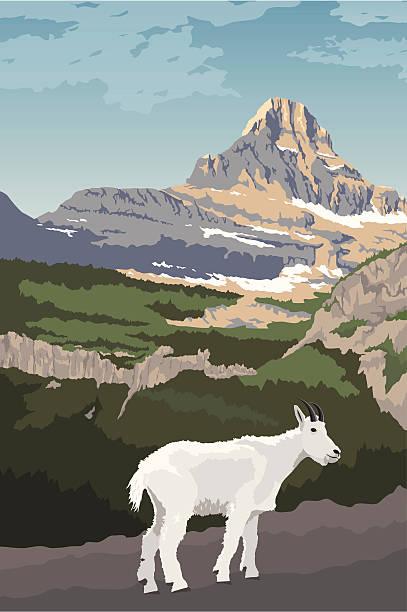 glacier national park mit mountain goat - nationalpark stock-grafiken, -clipart, -cartoons und -symbole