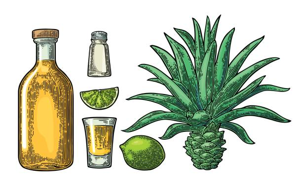 bildbanksillustrationer, clip art samt tecknat material och ikoner med glas och botlle av tequila. kaktus, salt, lime - cactus lime