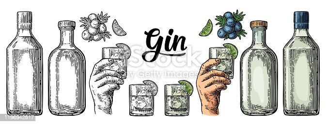 Glass, bottle and branch of juniper with berries. Handwriting calligraphic lettering gin. Vintage vector color engraving illustration for label, poster, web. Isolated on white background