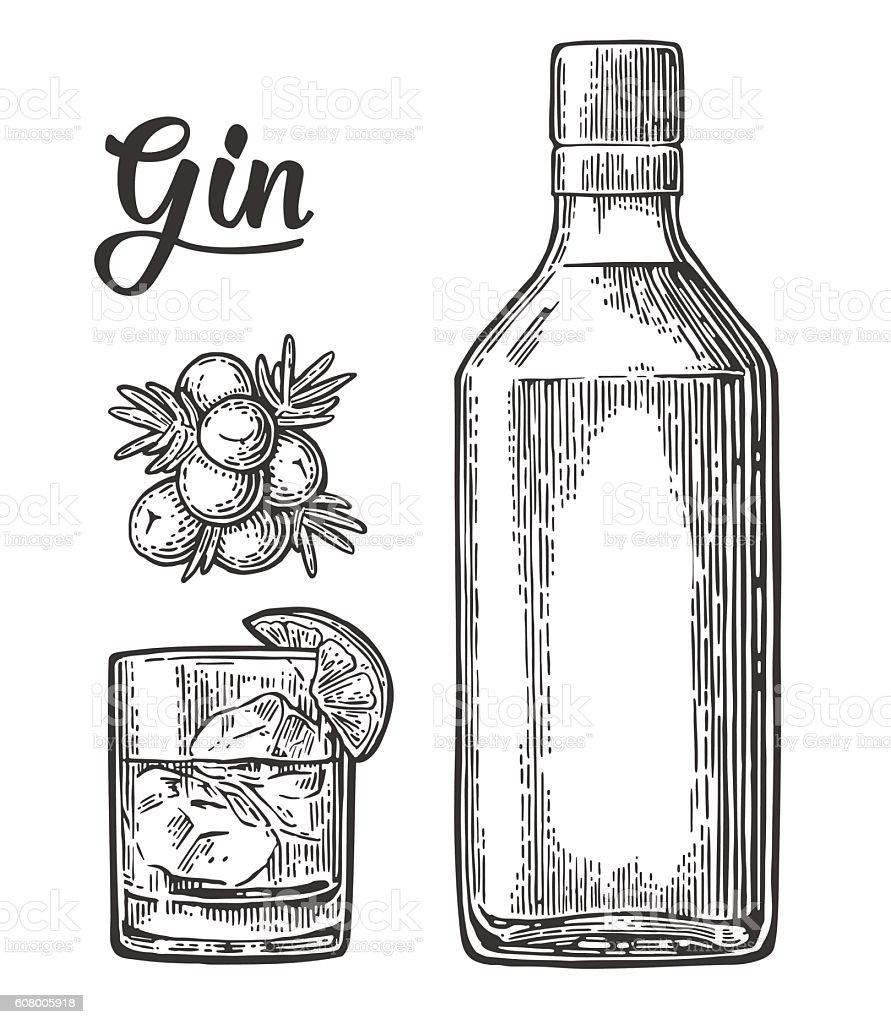 Glass and bottle of gin and branch Juniper with berries vector art illustration