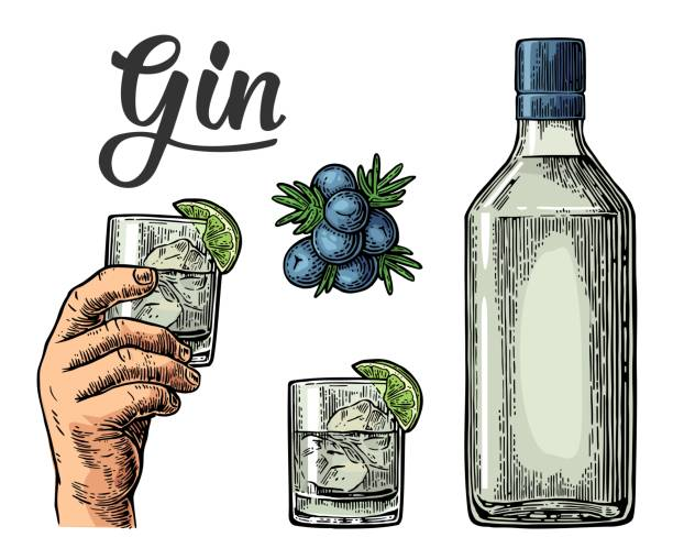 Glass and bottle of gin and branch of Juniper with berries Glass and bottle of gin and branch of Juniper with berries. Vintage vector engraving illustration for label, poster, web, invitation to party. Isolated on white background tonic water stock illustrations