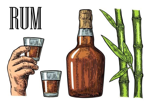 illustrazioni stock, clip art, cartoni animati e icone di tendenza di glass and bottle of rum with sugar cane. - canna da zucchero
