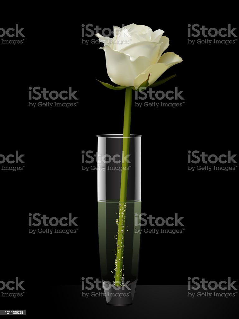 Vaso Di Vetro Con Rosa Bianca Su Sfondo Nero Immagini Vettoriali