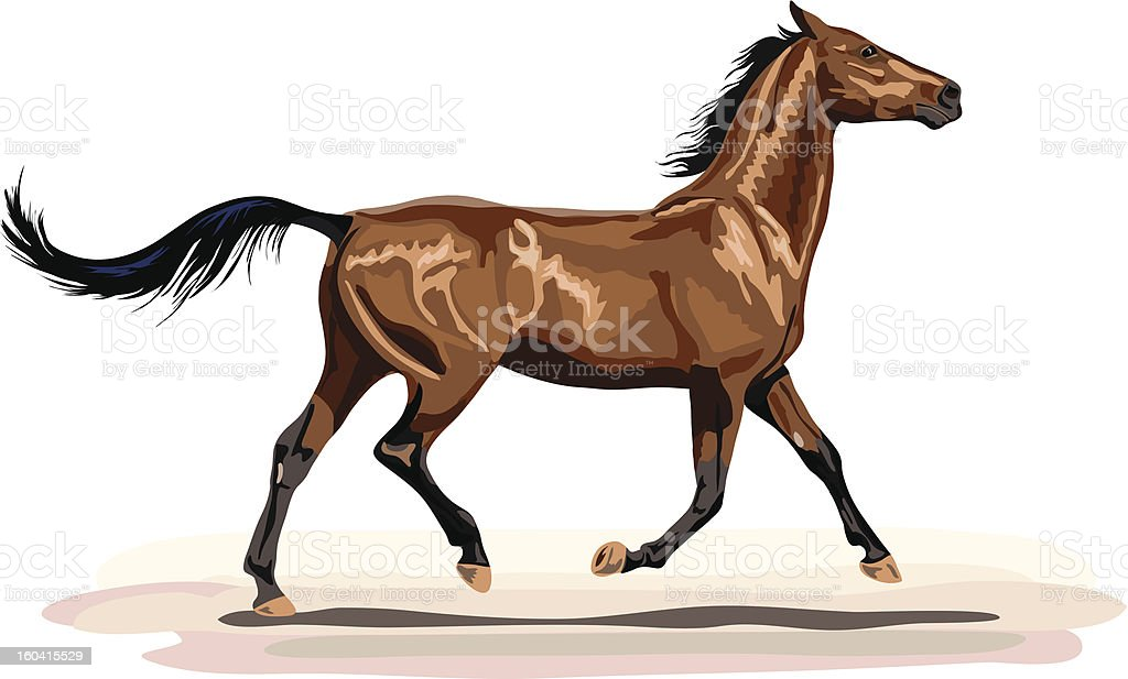 glossy brown horse in trot royalty-free stock vector art