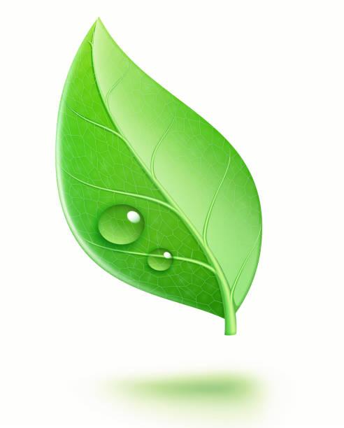 glossy green leaf vector art illustration