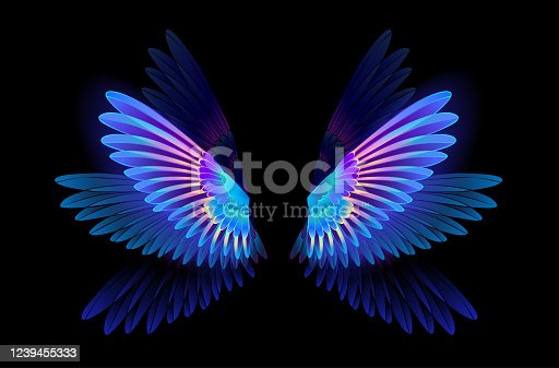 Transparent, luminous, blue, iridescent hummingbird wings on dark background.