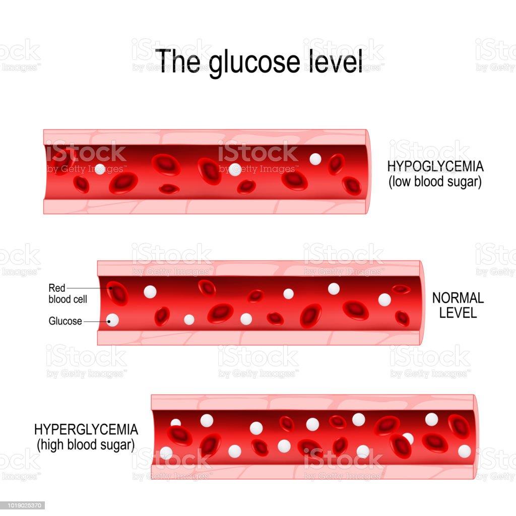 Ilustración de Glucosa En El Vaso Sanguíneo y más banco de imágenes ...