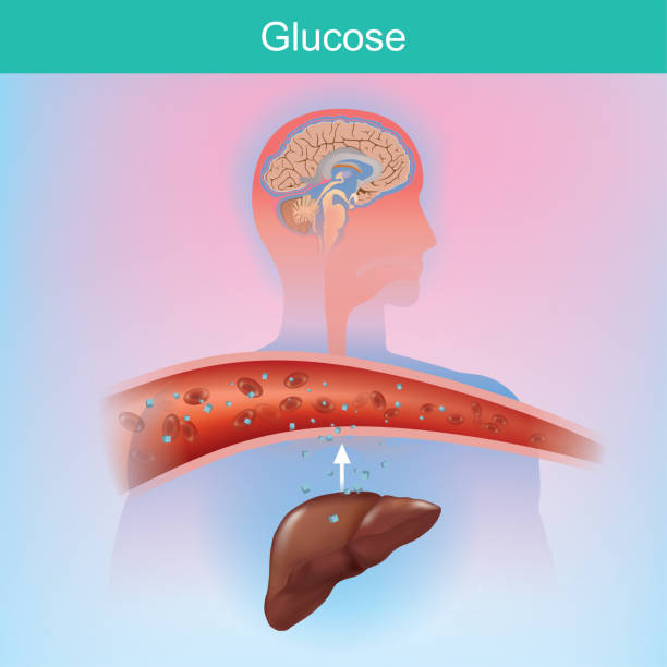 Glucose is a sugar that the body creates naturally by chemical process from the liver. Glucose is important to various cells. Especially at the brain Glucose is a sugar that the body creates naturally by chemical process from the liver. Glucose is important to various cells. Especially at the brain carbohydrate biological molecule stock illustrations