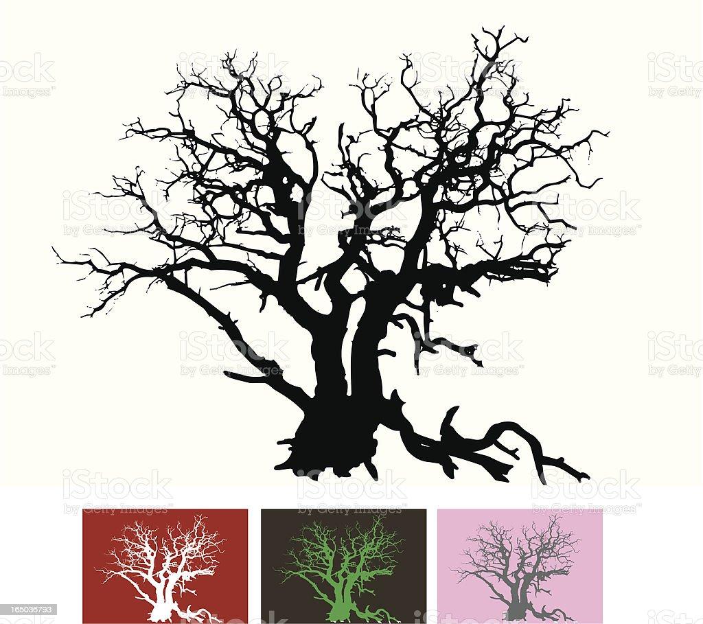 Gnarled tree vector art illustration