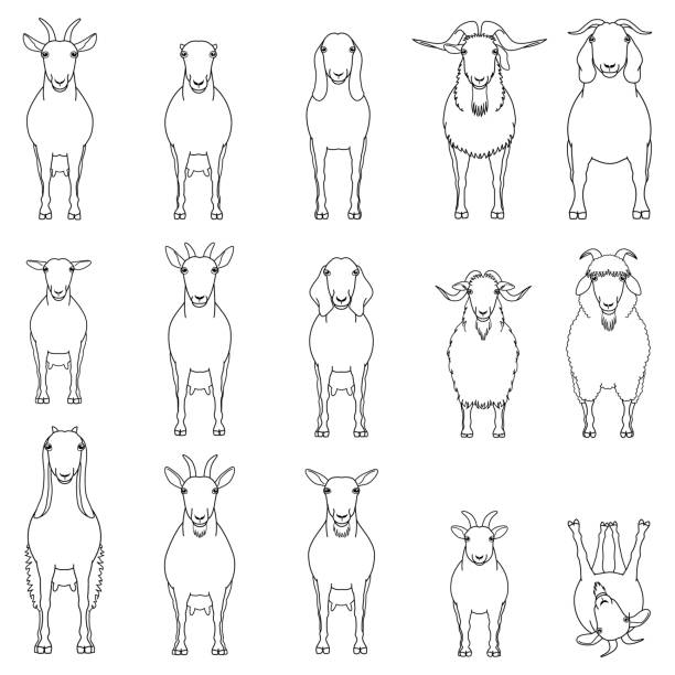 ziegenzüchter linienkunst-set - pashminas stock-grafiken, -clipart, -cartoons und -symbole