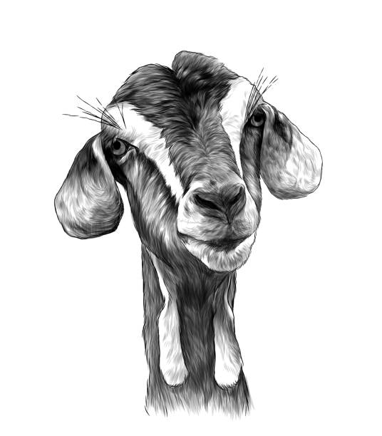 goat head girl with dangles on the bottom of the muzzle – artystyczna grafika wektorowa