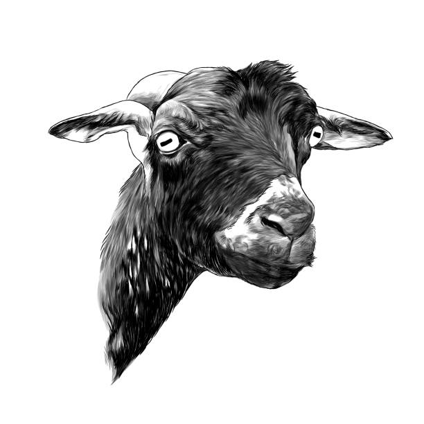 goat head – artystyczna grafika wektorowa