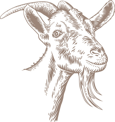 Goat head with horns