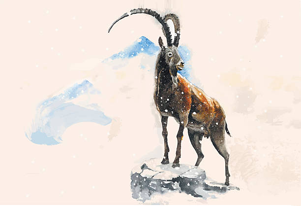 goat in die berge - bergziegen stock-grafiken, -clipart, -cartoons und -symbole